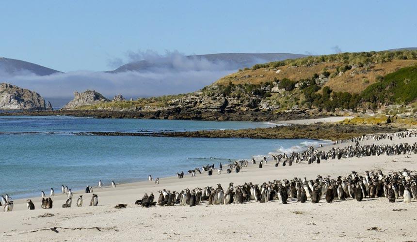 Antarktis - Falklandsøerne - South Georgia