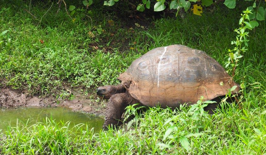 Ecuador Galapagos - Den ultimative fugle- og naturrejse