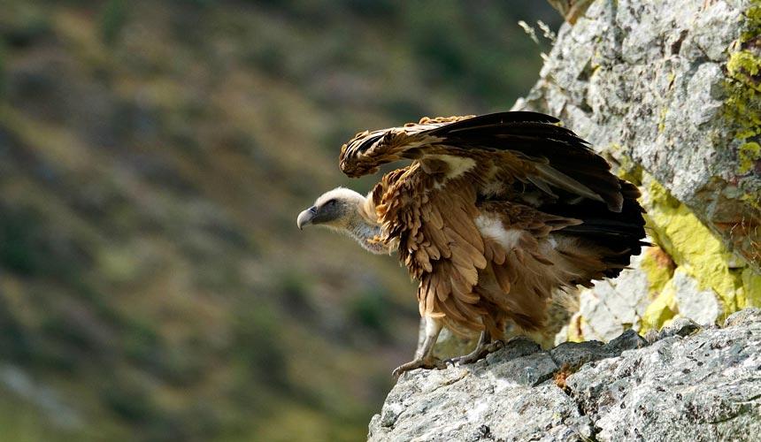Fugl i ekstremadura