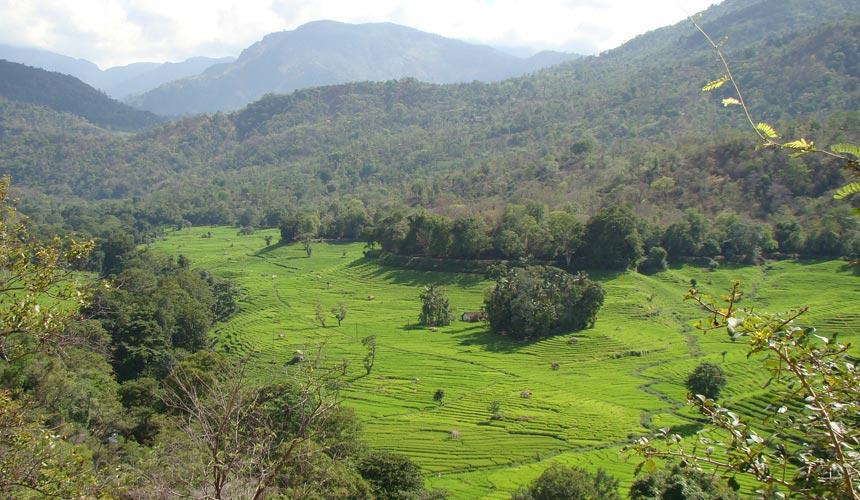 Drømmerejse til fugleparadiset Sri Lanka