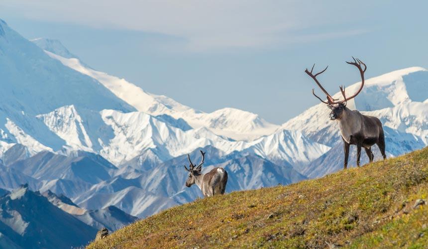 Oplev Alaska og den enestående natur
