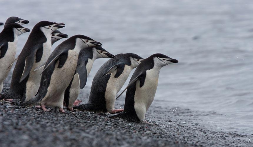 Antarktis rundt