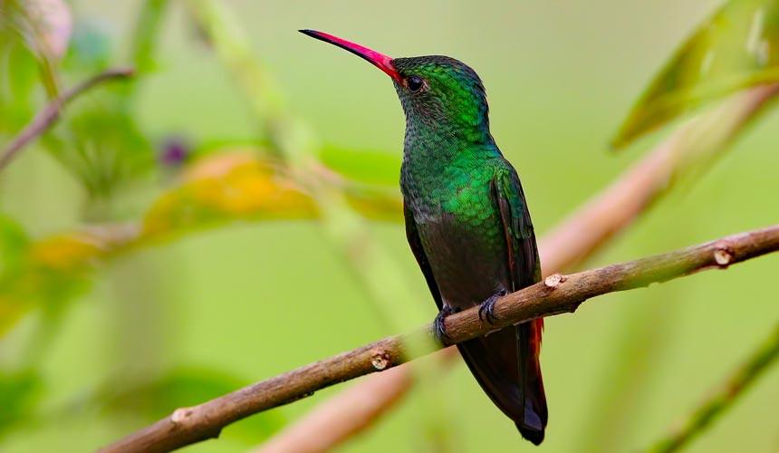 De helt store naturoplevelser i Costa Rica