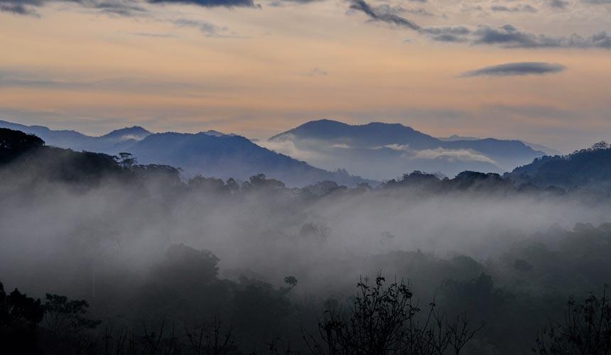 Oplev regnskoven og dyrelivet i Costa Rica