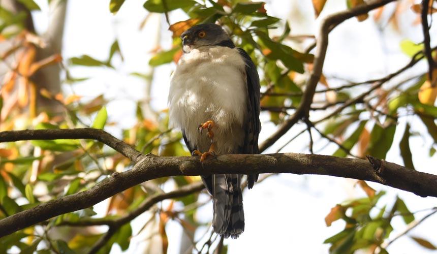 Oplev et natur- og fugleeventyr på Madagaskar