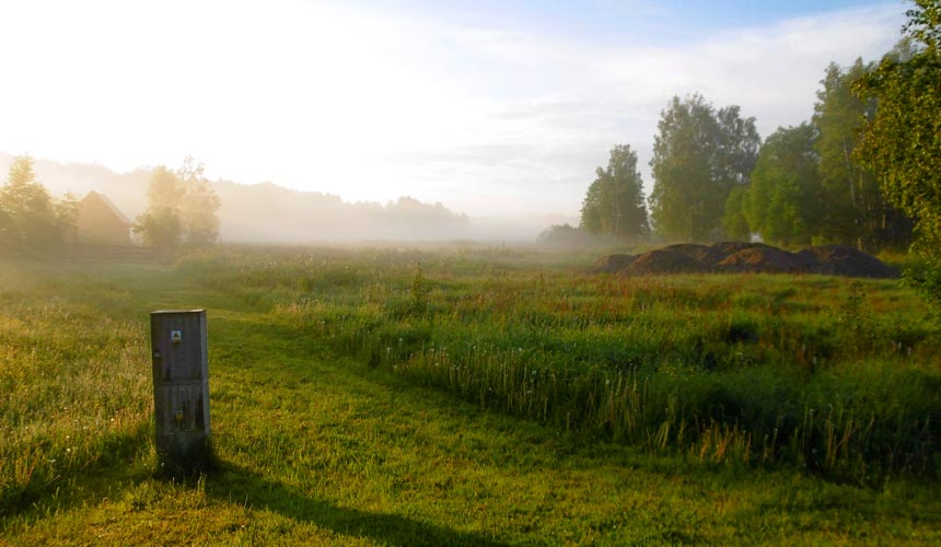 Europas sidste urskov finder du i Polen