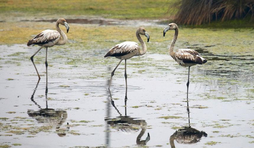 fugle i Portugal
