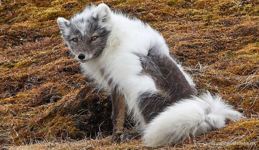 Tag med til verdens nordligste by Longyearbyen