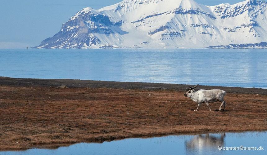 Svalbards natur